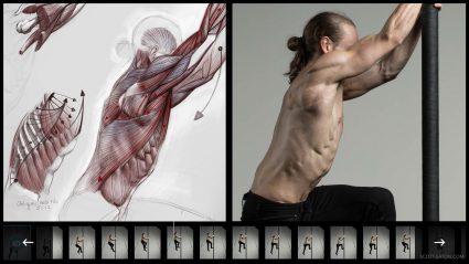 2d Anatomy study - ecorche drawing
