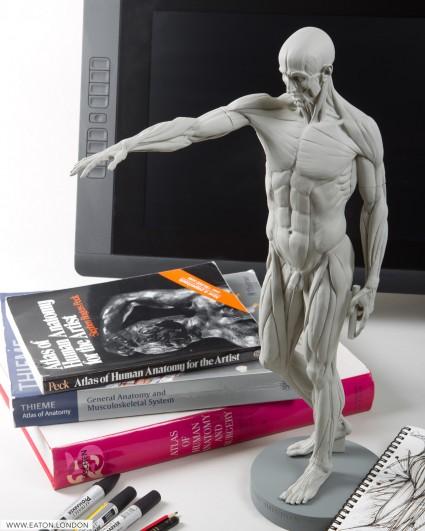 Desktop Anatomy figure - Eaton Houdon Ecorche