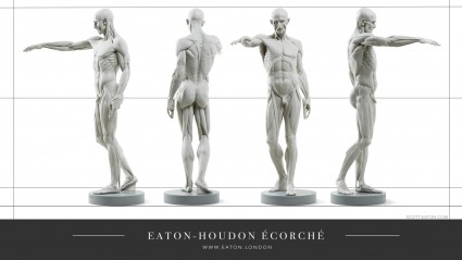 Multiple views of the Houdon Ecorche v2