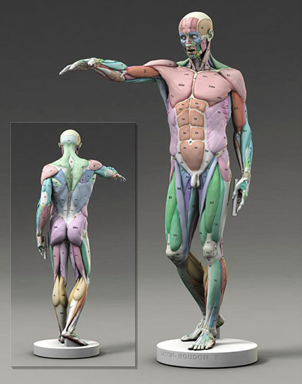 Scott Eaton's update to Antoine Houdon's classic L'Ecorche. Shown here with muscle map..