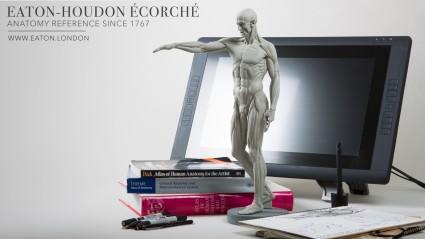 Houdon Ecorche Sculpture 2.0 - Desktop anatomy reference