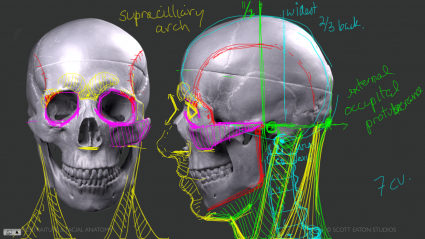 Overview of the construction of the skull - CA facial anatomy workshop.