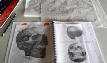 facial anatomy exercises, in progress.