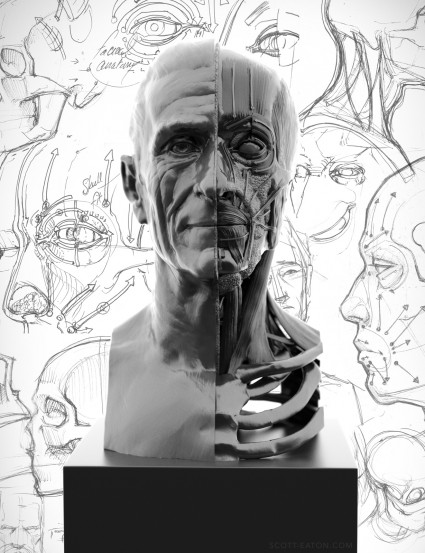 Facial Anatomy for Artists study in ZBrush.  écorché of facial muscles, fat and cartilage, with arrows indicating FACS Action Units