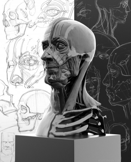 Three quarters view of Facial Anatomy ecorche, with arrows showing Ekman's FACS Action Units