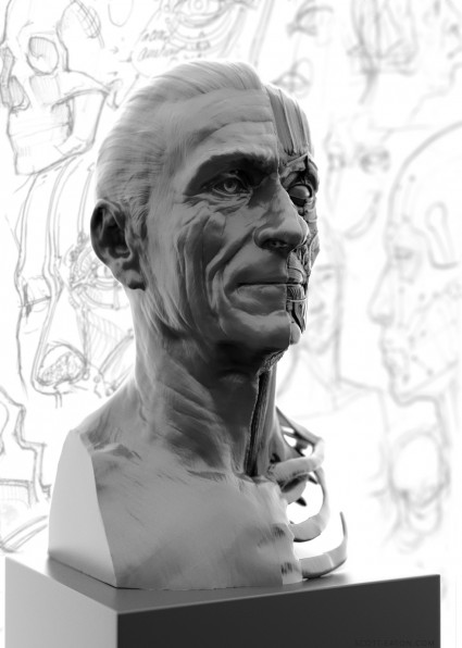 Portrait side of the ecorche study. Relates the underlying facial anatomy to the surface forms of the face.
