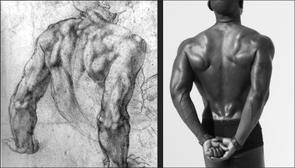 artistic anatomy course week 3 - upper and lower back