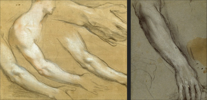 artistic anatomy course week 4: Upper Arms and Forearms