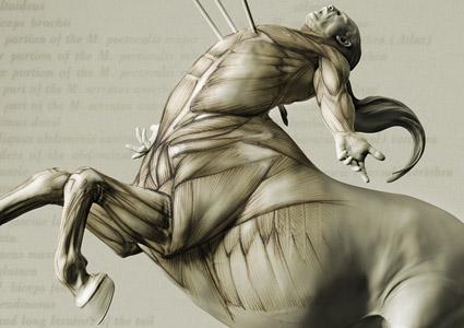 anatomy of a centaur