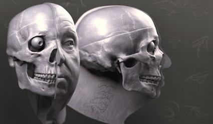 facial-anatomy-skull-tn