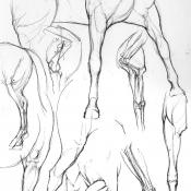 leg studies