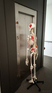 Skeleton leaving the studio. Done for the week.
