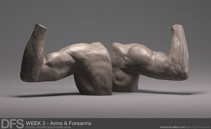 Week 3 Exercise - Arms and Forearms in Zbrush